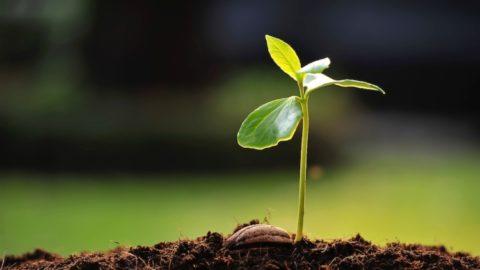 I giardinieri delle generazioni future