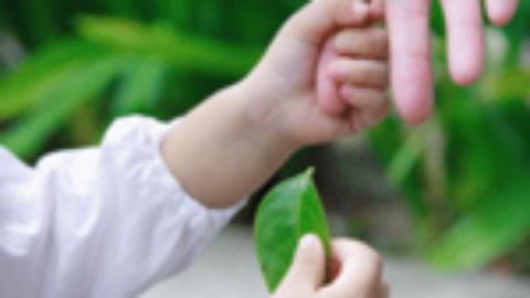 Come tutelare le generazioni future