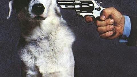le mutilazioni canine