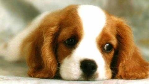 Nei concorsi canini non c'è amore