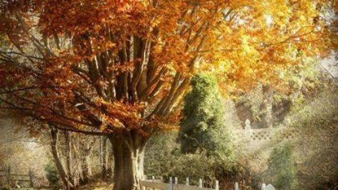 """""""M'hanno detto che gli alberi ed i boschi, sono un tesoro della patria mia"""""""