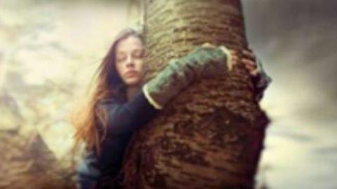 L'albero, il miglior alleato della vita
