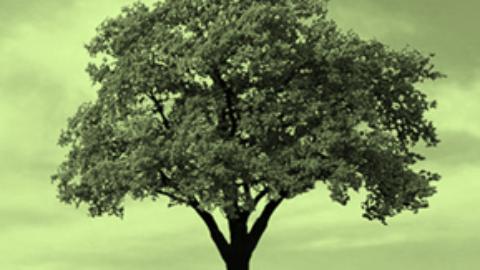 Gli alberi, indispensabili per la vita