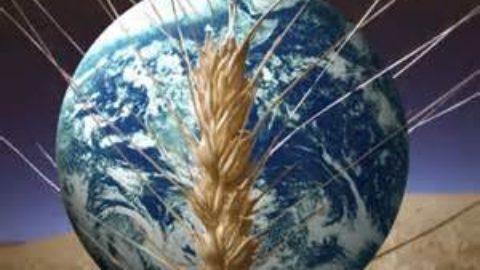 Nuovi cibi, un mezzo per sconfiggere la fame nel Mondo.