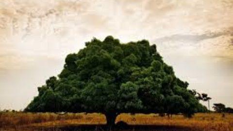L'albero è vita