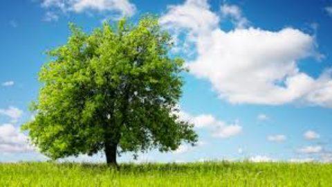 Quanto sono importanti gli alberi?
