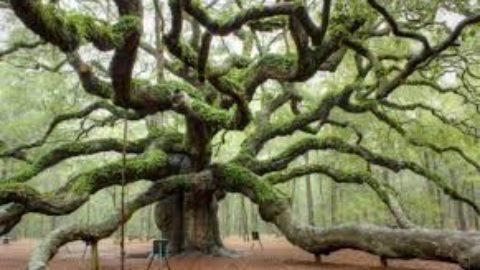 L'albero è cultura.