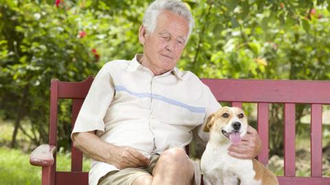 I cani: amici dell'uomo.