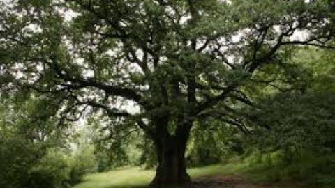 Gli alberi: i maestri della vita.
