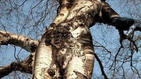 Cos'è l'albero?
