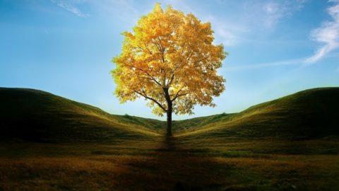L'albero: polmone verde dell'umanità
