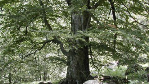 L'albero non è stato creato per caso