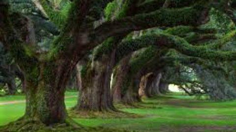 Trees=Life