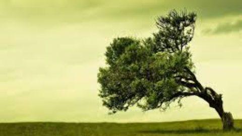 Gli alberi, un qualcosa di spettacolare