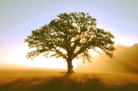 L'importanza dell'albero