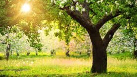Gli alberi: padri dell'umanità