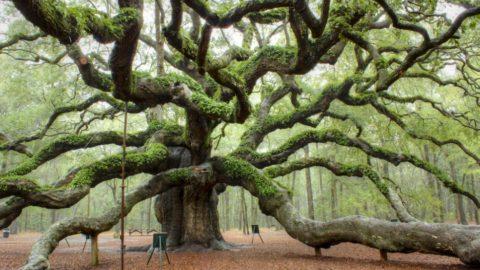 L'albero è cultura!