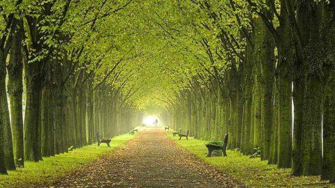 Gli alberi simbolo di importanza