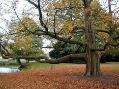Gli alberi: i nostri nonni!