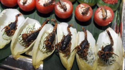 Un pranzo di insetti!