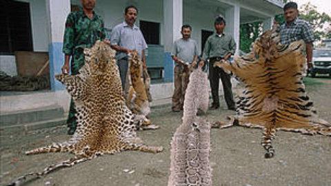 Animali in estinzione: un fenomeno sempre più preoccupante
