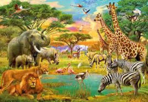 Animali e uomini: chi sono i predatori?