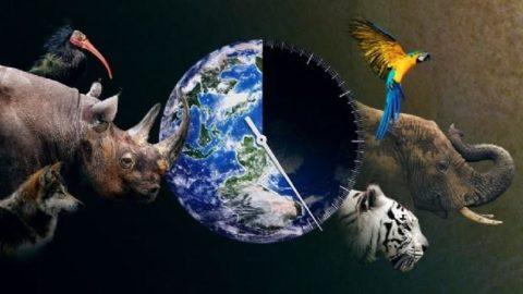 Riusciremmo a salvare gli ultimi animali in via d'estinzione?