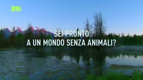 UOMO KILLER: ANIMALI IN VIA DI ESTINZIONE!!