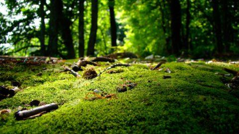 Diminuzione al contatto con la natura