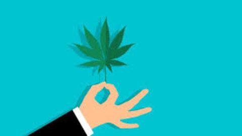 La legalizzazione della cannabis